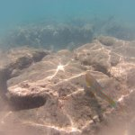 Photo of Hanauma Bay Nature Preserve