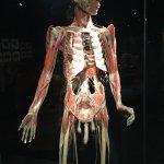Photo of Body Worlds