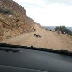 Strada sterrata per 7 km con capretta :)