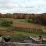 Fall foliage from the patio