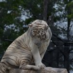 they are building new exhibits for large cats for 2017