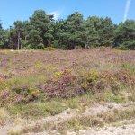 woodbury common walks