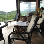 Casa panorama balcony !! 🐒🐒