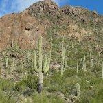 Foto di Tucson Mountain Park