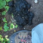 Beware of bears!  and their poop:-)