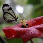 Photo de Butterfly Conservatory