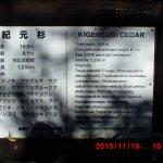 Photo de Kigensugi Cedar