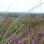 Photo de Hengistbury Head
