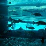 waterslide through the Shark-Tank