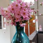 Flowers at the counter