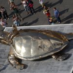 The turtle, from above