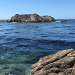 This rock is home to hundreds of sea lions. Watch them play & hear them bark.