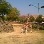 Photo of Artis Zoo