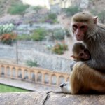 Foto de Monkey Temple (Galta Ji)