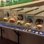 Museo delle Genti di Montagna