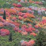 Fall Colors at Guardsman Pass