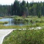 The Beaver Boardwalk Foto