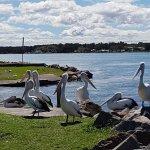 Swansea Gardens Lakeside Holiday Park Foto