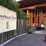 Tamarind Tree照片