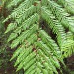 Foto de Redwoods, Whakarewarewa Forest