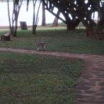 Voyager Ziwani, Tsavo West Image