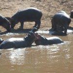 Baby hippo pond.
