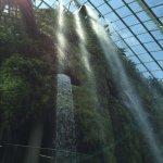 Cloud Forest Foto
