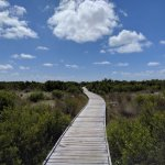 A boardwalk protecting the dunes.