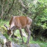 Area Faunistica del Cervo di Viggianello