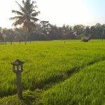 Trekking the rice fields