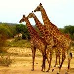 Wilderness Safaris DumaTau Camp Foto