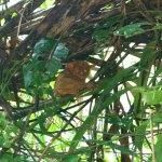 A tarsier at the Philippine Tarsier Sanctuary