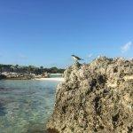 Photo of Grand Sirenis Mayan Beach Resort & Spa