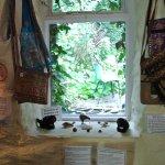 Photo of The Wren's Nest