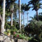 Las palmeras que le dieron su nombre