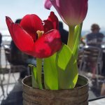 beautiful tulips adorning our table :)