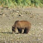 Avistamiento de Osos de Kodiak en Katmai