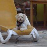Haushund Jack