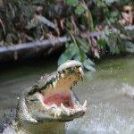 Croc Attack Show