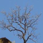 Daan Viljoen Nature Reserve Foto