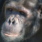 Chimpanzee Sancturay