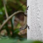 Geckos are everywhere!