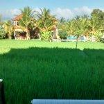Vue de la rizière depuis la terrasse. Piscine au fond