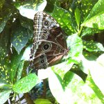 Foto di Key West Butterfly and Nature Conservatory