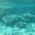 Hanauma Bay Nature Preserve Φωτογραφία