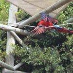 exhibicion de aves tropicales
