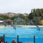 exhibicion delfines