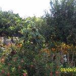 Garden adjacent to accomodation