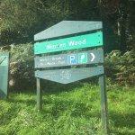 Warren Wood