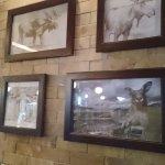 Moose and Kangaroos..............